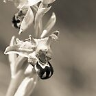 Monochromatic Bee Orchid by zoundz