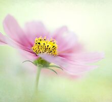 Summer Breese by Jacky Parker