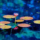 The Lily Pads by Larry Trupp