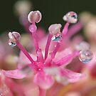 Pink Magic by KUJO-Photo