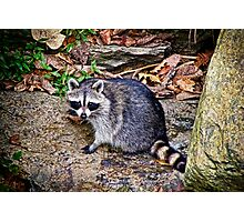 An Appearance by Rocky Racoon Photographic Print