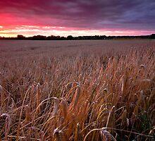 Bealings, Suffolk by Thomas Harvey