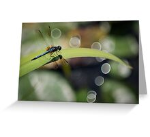 Dragon Fly Enjoying the View Greeting Card