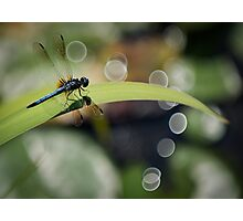 Dragon Fly Enjoying the View Photographic Print