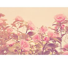 Camellia Bush Photographic Print
