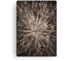 Allium Seed head in monochrome Canvas Print