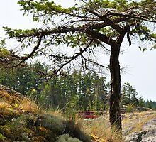 Smuggler's Cove hike by JennaKnight