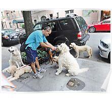 A dog walker Poster