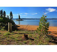 Pine Trees In Lake Almanor Photographic Print
