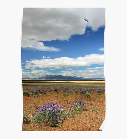 Lupines In Honey Lake Valley Poster