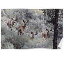 Three bucks and a doe Poster