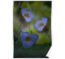 remembrance in pastel blue Poster