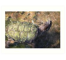 Impressionistic Snapping Turtle Art Print