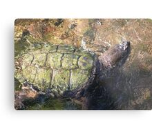 Impressionistic Snapping Turtle Metal Print