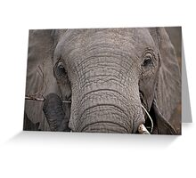 Elephant Fine Dining Greeting Card