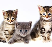 kittens by ratto