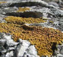 I Lichen by KimSha