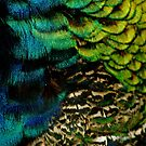 Plumage by Kirstyshots