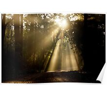 Forest Rays Poster
