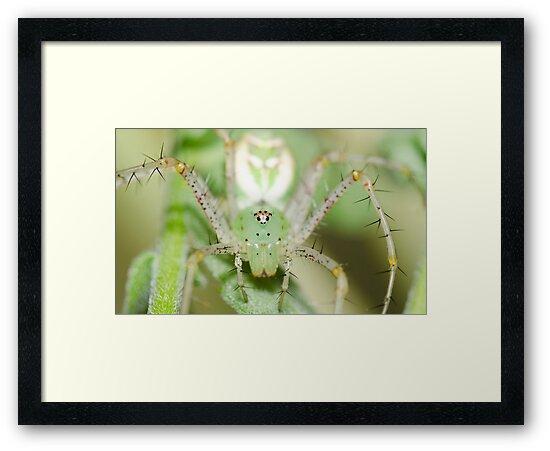 Spider! by vasu