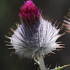 Thistle Bud by Ron Hannah