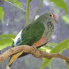 Divine Dove. Rose-crowned Fruit-dove - Ptilinopus regina by Lydia Heap