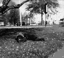 Sleeping in the PArk  by creationstation