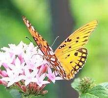 Nectar tasting... by Binay Gupta