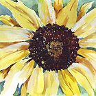 Helianthus annus (Sunflower) by Maree  Clarkson