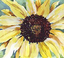Helianthus annus (Sunflower) by Maree  Clarkson