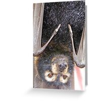 Why are you upside down? Specticled Flying-fox - Pteropus conspicillatus Greeting Card