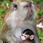 Monkey Baby by PerkyBeans