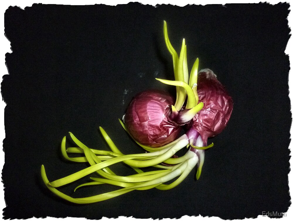 Wrapped in each other - Red Onions by EdsMum