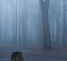 0924 A walk in the woods by DavidsArt