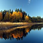 Reflections by Gina J