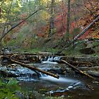 Creekside Color by Sue  Cullumber