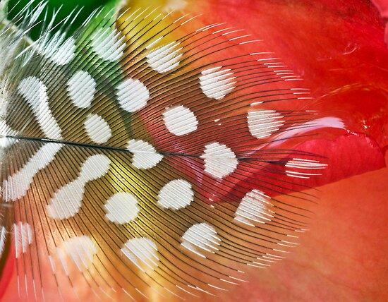 Rose Sherbet by Kenneth Haley
