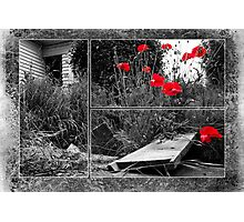 After The Earthquake - Out of the Cracks Photographic Print