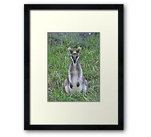 What the..... Framed Print