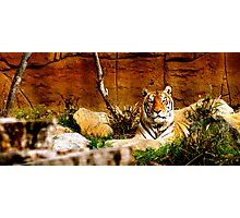 In my domain Photographic Print
