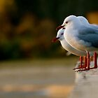 See the Gulls by Matt Hill
