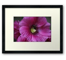 Powdered Bumble-Bee Framed Print
