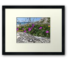Coastal wildflowers Framed Print