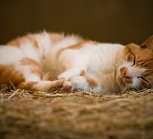 cat nap by ladybee