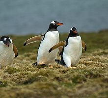 Penguin Cross Country by MarkHRoberts
