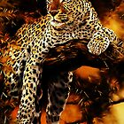 Leopard (Panthera pardus) by Terry Bailey