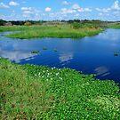 Myakka River View by Rosalie Scanlon