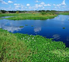 Myakka River View by Rosalie Scanlon