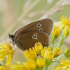 Ringlet by Gill Langridge