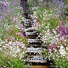 Mainau - Italian flower stairs, detail by bubblehex08
